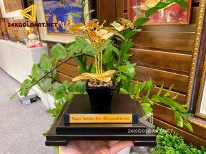 Cây lan dát vàng - quà tặng tết mang nhiều ý nghĩa độc đáo